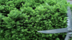 trim hedge bushes bush cutting - stock footage