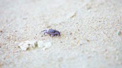 Small dark crab on white sand beach Stock Footage