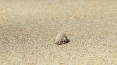 Small cancer hermit on the sand closeup Stock Footage