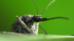 Macro mosquito Stock Footage