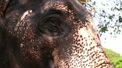 Close-up view of elephant head Stock Footage