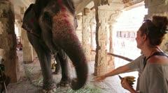 Female tourist feeding elephant with fruits Stock Footage