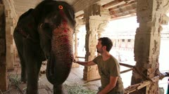 Male tourist stroking an elephant by its trunk Stock Footage