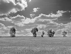 row of trees in black and white - stock photo