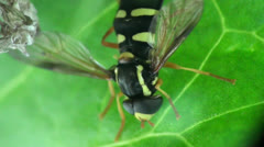 Wasp sits near the nest Stock Footage