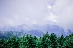 Smoky mountains tree tops Stock Photos