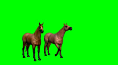 Two horses at rest green screen Stock Footage