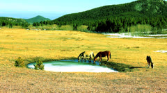 Horses drinking icy water #1a Stock Footage