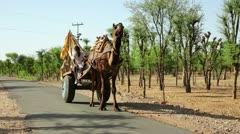 PUSHKAR, RAJASTHAN, INDIA - APRIL, 2013: Camel-driven cart moving along country Stock Footage