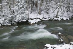 snow covered pine trees on the side of a river in the winter. - stock photo