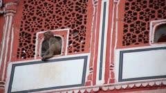 Cute little monkey looking through window Stock Footage