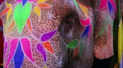 Close-up view of painted elephant head - stock footage
