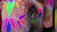 Stock Video Footage of Close-up view of painted elephant head