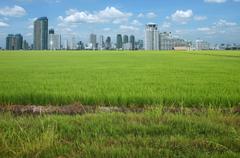 Rice field buildings.. Stock Photos