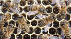 Conversion nectar into honey Stock Footage