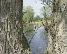 Ontario river streaming in spring, pan rapids Stock Footage