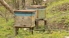 The apiary. Beehives Stock Footage