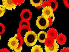 Red and Yellow Flowers Animation Stock Footage