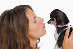 Pretty woman looking at her chihuahua Stock Photos