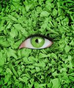 Stock Photo of Green eye in the middle of leaves