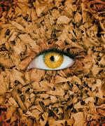 Yellow eye in the middle of leaves - stock photo