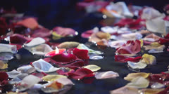 Rose petals Stock Footage