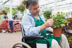Garden center worker in wheelchair holding potted plant - stock photo