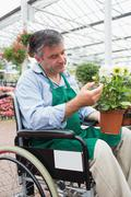 Stock Photo of Man in wheelchair touching and admiring potted plant