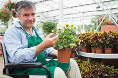 Man in a wheelchair holding a flower pot in a greenhouse - stock photo