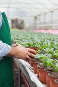 Garden center worker putting potted plant down - stock photo
