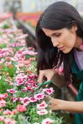 Garden center worker cutting flowers Stock Photos