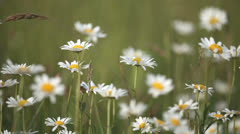 Meadow - stock footage