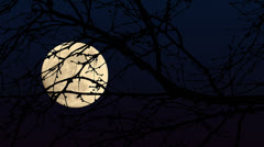 Full Moon Branches Close Up Stock Footage