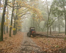Logging in pine forest - wide shot Stock Footage