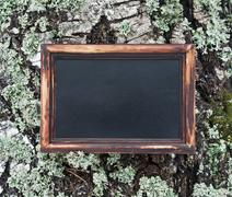 Blackboard hanging on the tree covered with moss Stock Photos