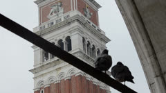 Campanile pigeons, piazza San Marco Stock Footage