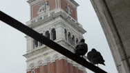 Stock Video Footage of campanile pigeons, piazza San Marco