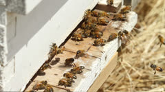 Worker Bees Stock Footage