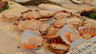 Stock Video Footage of scallops