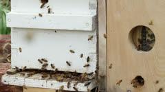 Honey Bee Colony Stock Footage