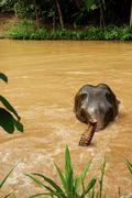 Stock Photo of thai elephant