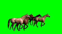 Four horses galloping green screen Stock Footage