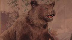 Stuffed bear Stock Footage