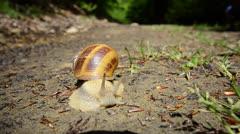Beautiful snail hd, wide angle, copyspace Stock Footage