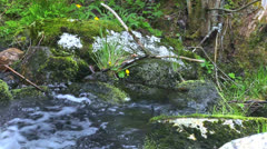 Watercourse 05 - stock footage