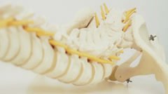 Spinal Cord Model - 25FPS PAL Stock Footage