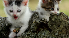 Two cute kittens Stock Footage