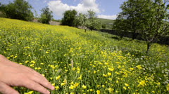 Touching flower field medow Stock Footage