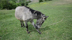 Wide angle take of a donkey mule head Stock Footage