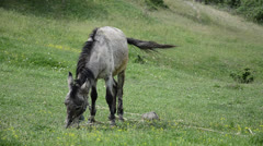Donkey mule Stock Footage